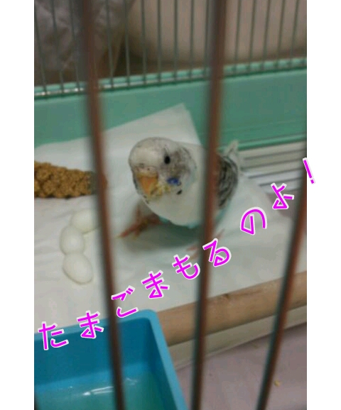 20121112-233751.jpg