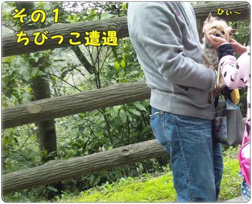 DSC_0031_convert_20120417224245.jpg