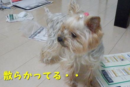 PC250051_convert_20111228213704.jpg