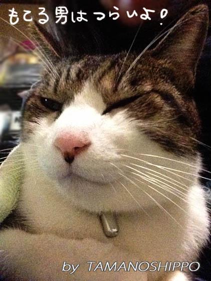 おすまし猫(膝の上)