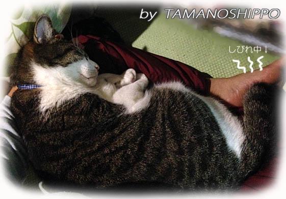 ひざの上で寝る猫
