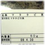 090419マタタビ2.jpg