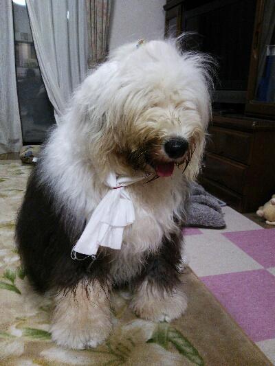fc2blog_201210281937122b9.jpg