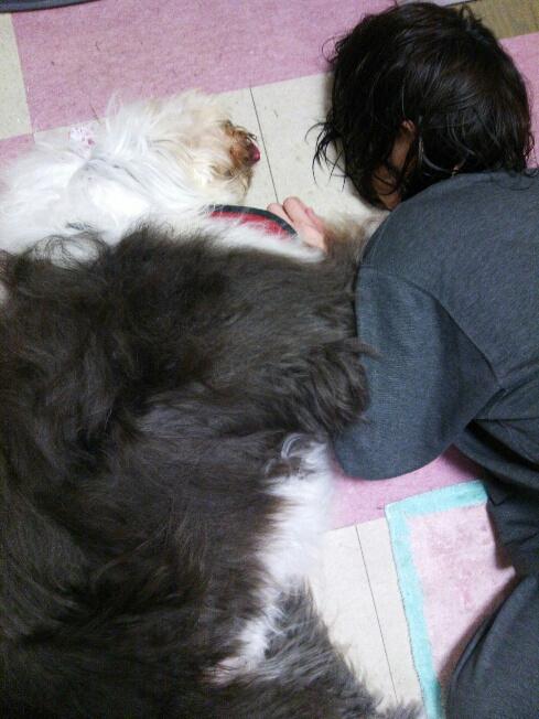 fc2blog_20121121225812c60.jpg