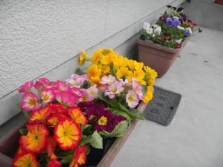 イースターの花