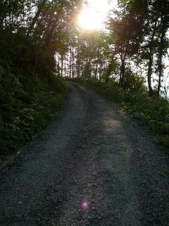 日暮れの林道