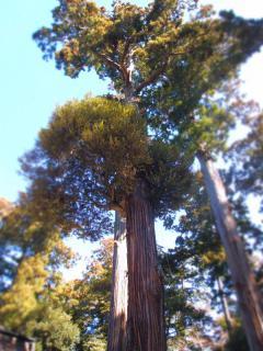 参道の樹木