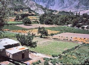 ミナピン村