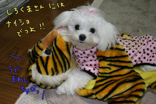 IMG_3678-1.jpg