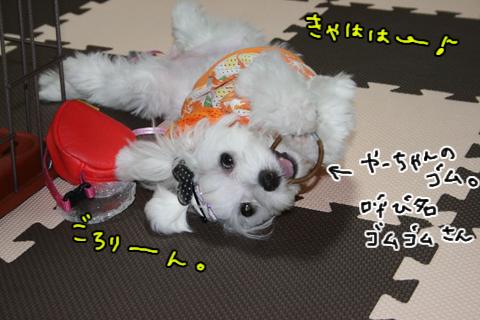 IMG_8950-1.jpg