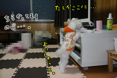 IMG_8957-1.jpg