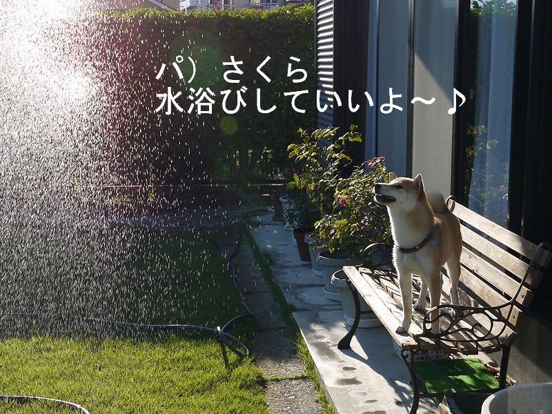 水浴び最高♪