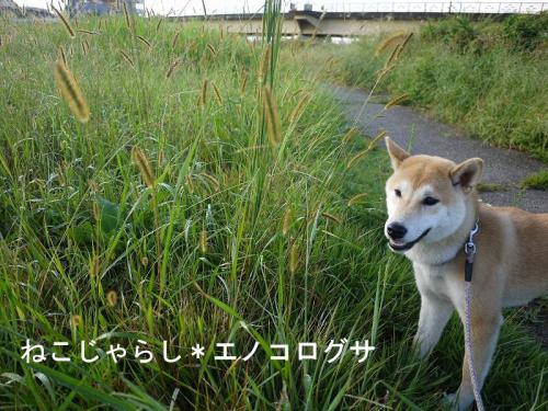 お散歩の草