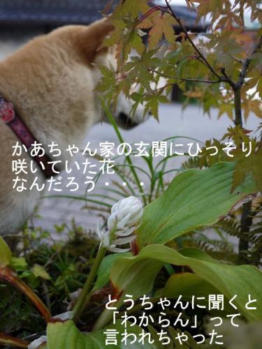 散歩道のお花4