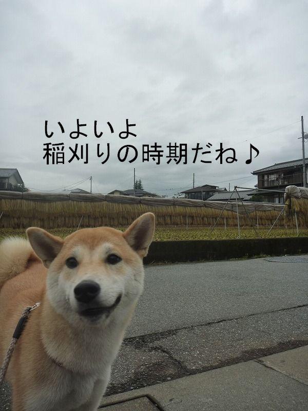 雨散歩後のお楽しみ♪