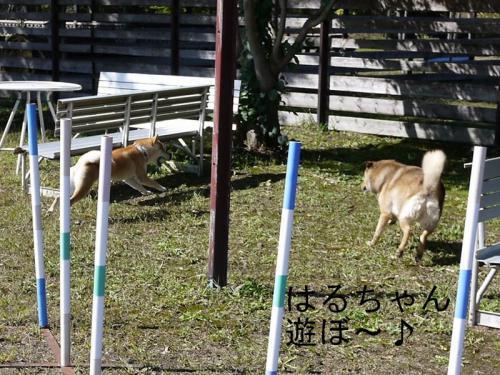 清里ドッグラン6