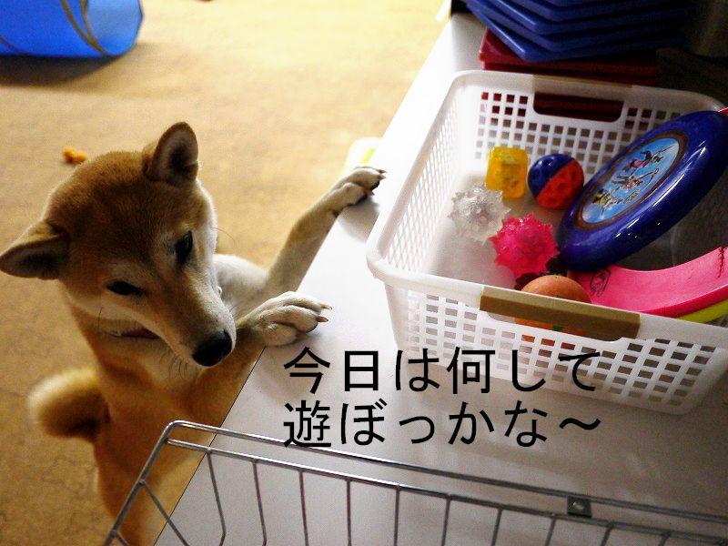 室内ドッグランで遊んだよ♪(Dog Run & Cafe ONE×2)