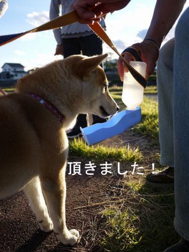 くらちゃんと散歩3