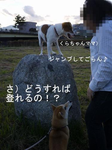 くらちゃんと散歩4