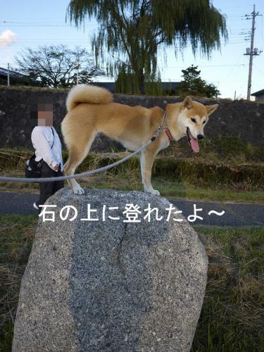 くらちゃんと散歩5