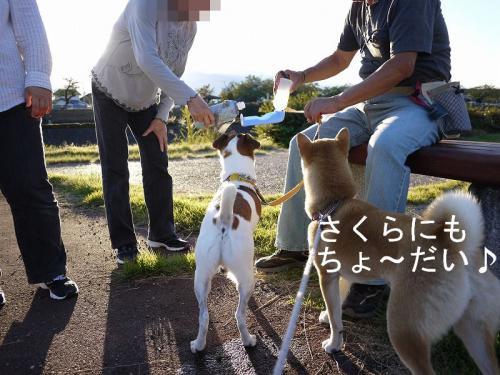 くらちゃんと散歩2