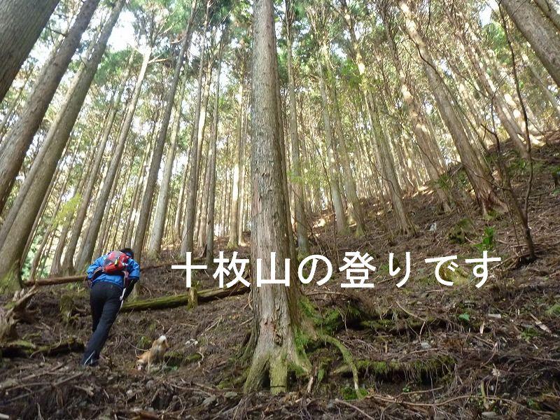 11月27日(日)の日記:十枚山へ行ってきたよ♪