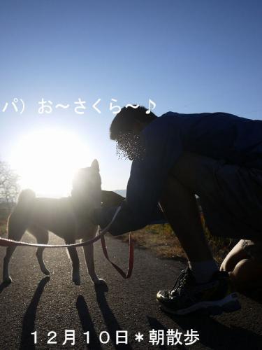 10日の朝散歩1