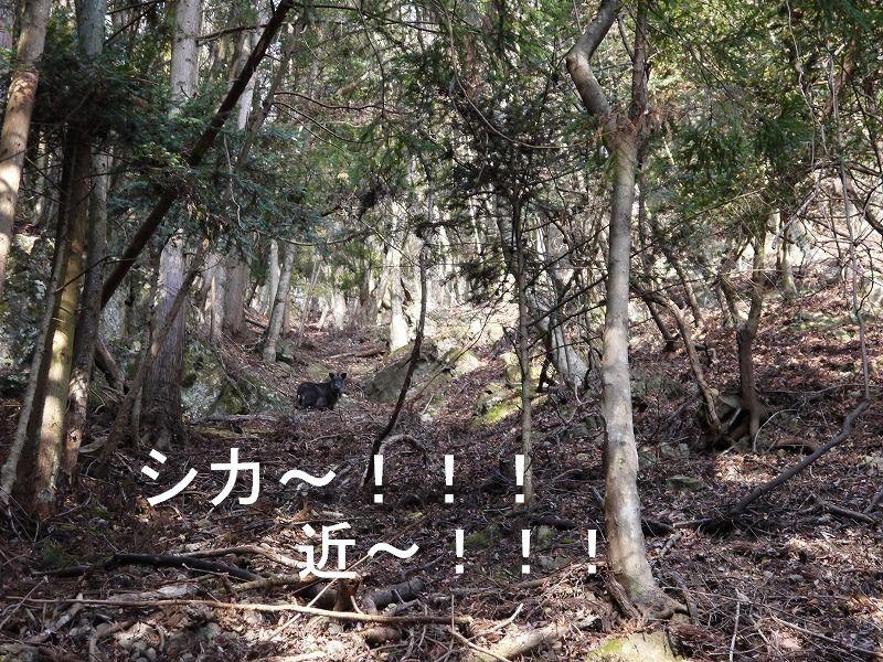 初登りは富士見山♪