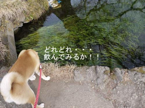 忍野八海4