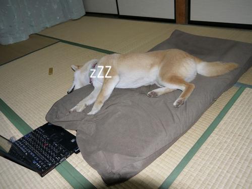 さくらの睡魔4