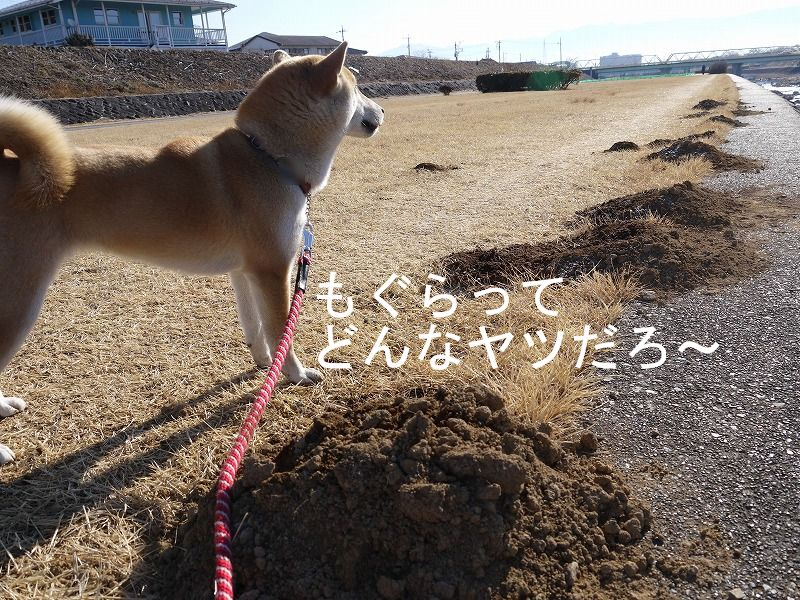もぐらを見たくて掘ってみたけど・・