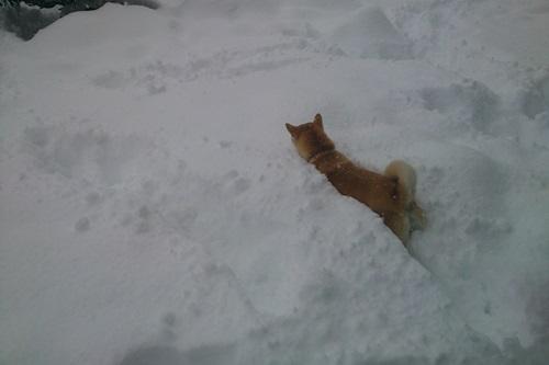 雪遊びとさくらの誕生日会
