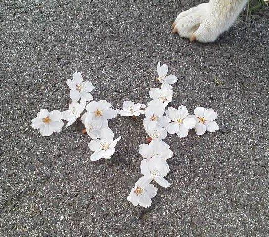 桜de文字アート