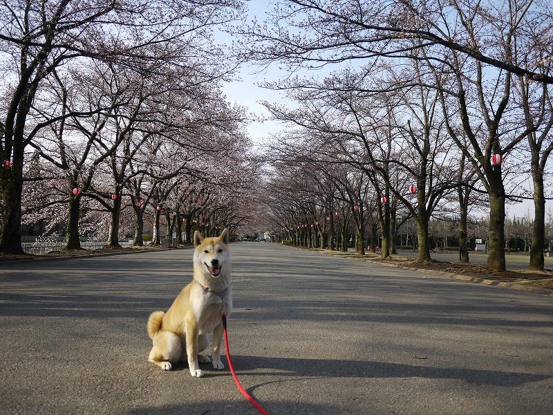 小瀬スポーツ公園de朝散歩