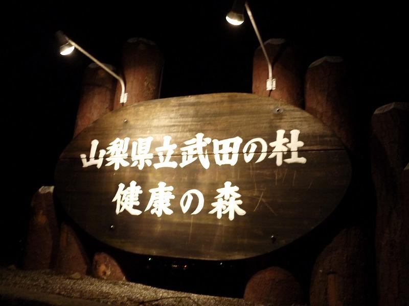 夜桜(よるのさくら♪)