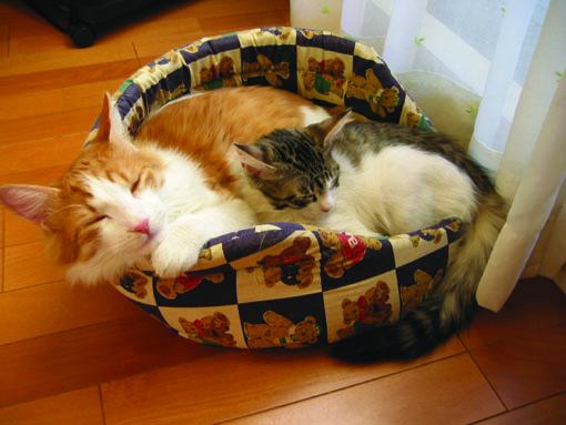 2匹でベッド