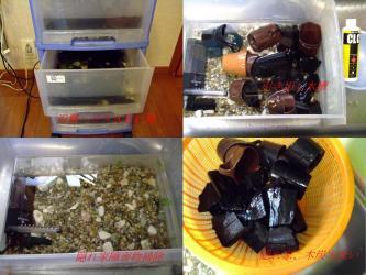 沢蟹ハウス水槽はこんな感じです!水槽の中身、隠れ家と木炭など2011.12.09
