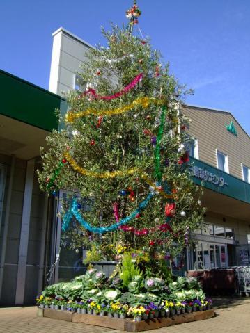 いつも利用しているJA農協~オリーブの木でできたクリスマスツリーwイイ感じ~2011.12.06