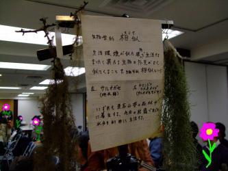 生物学的相似~左:サルオガセ 右:チランジア ウスニオイデス・いづれも着生植物のようです。~I.S.I.J新年会品評会展示品~2012.01.08