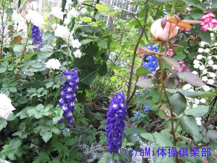 IMG_0779-1.jpg