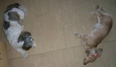 blog_import_4ef03342d303e.jpeg
