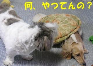 blog_import_4ef05475b9218.jpeg