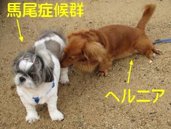 blog_import_4ef072af575f8.jpeg