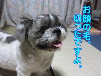 blog_import_4ef073900cc10.jpeg