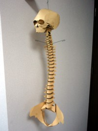 skeleton_04.jpg